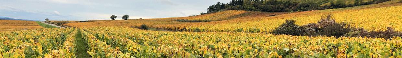 La Bourgogne vue par Vins80